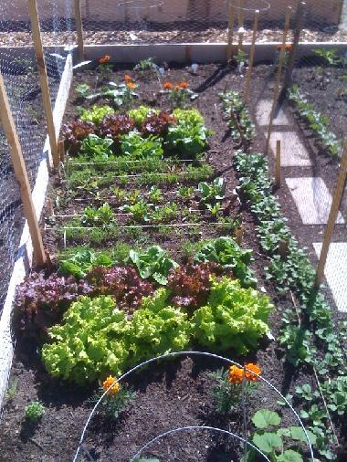 Town Of Provincetown Ma Official Website B Street Garden